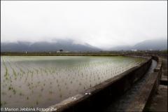 Taiwan-dag-133-14