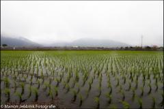 Taiwan-dag-133-15